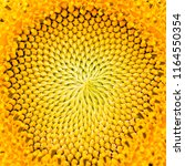 macro sunflower. nature... | Shutterstock . vector #1164550354