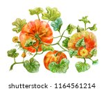 three orange pumpkins grow on... | Shutterstock . vector #1164561214