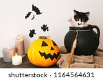 Stock photo happy halloween concept cute kitty playing in witch cauldron with jack o lantern pumpkin with 1164564631