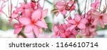 nature pattern of blossoming... | Shutterstock . vector #1164610714