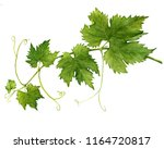 grape branch with leaves close... | Shutterstock . vector #1164720817