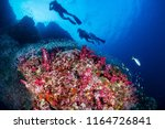 scuba divers swimming over a... | Shutterstock . vector #1164726841