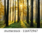 beautiful morning scene in the... | Shutterstock . vector #116472967
