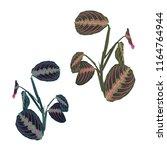 vector tropical plant  jungle... | Shutterstock .eps vector #1164764944