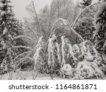 arcs from trees bent by snow... | Shutterstock . vector #1164861871