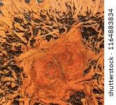 wood texture of cut tree trunk  ... | Shutterstock . vector #1164883834