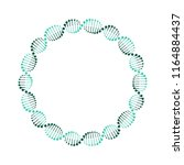 dna circle. vector. isolated. | Shutterstock .eps vector #1164884437