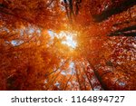 colorful autumn treetops in... | Shutterstock . vector #1164894727