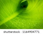 close up green leaf with water... | Shutterstock . vector #1164904771
