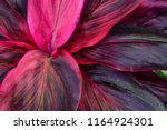 tropical leaves  large foliage... | Shutterstock . vector #1164924301