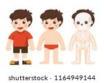 kid body anatomy. vector... | Shutterstock .eps vector #1164949144