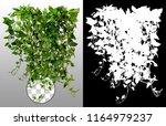 climbing plant in summer... | Shutterstock . vector #1164979237