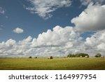 view of nice fresh green grass... | Shutterstock . vector #1164997954