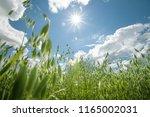 view of nice fresh green grass... | Shutterstock . vector #1165002031