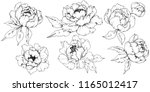 wildflower peony in a vector...   Shutterstock .eps vector #1165012417