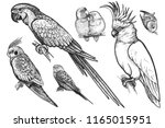 birds set. realistic isolated... | Shutterstock .eps vector #1165015951