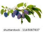 the branch with ripe plums and... | Shutterstock . vector #1165087837