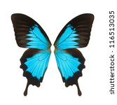 Butterfly Wings  Isolated On...