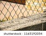little lizard on the wall. | Shutterstock . vector #1165192054