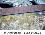 little lizard on the wall. | Shutterstock . vector #1165192621