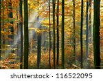 Golden Autumnal Forest