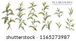 botanical illustration. tea set.... | Shutterstock . vector #1165273987