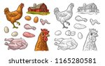 set chicken. whole hat  leg ... | Shutterstock .eps vector #1165280581