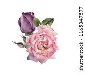 bouquet of roses  watercolor ... | Shutterstock . vector #1165347577