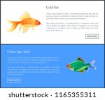 green tiger barb and goldfish... | Shutterstock .eps vector #1165355311