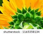 Sunflower Texture  Natural...