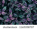 tropical leaves texture  dark... | Shutterstock . vector #1165358707