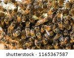 swarm of bees background | Shutterstock . vector #1165367587