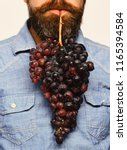 winegrower holds cluster of...   Shutterstock . vector #1165394584