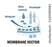 membrane fabric sign. layered... | Shutterstock .eps vector #1165400281