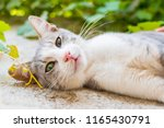 cat with green eyes outdoors | Shutterstock . vector #1165430791