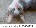 cat with green eyes outdoors | Shutterstock . vector #1165430794
