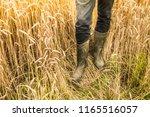 farmer's legs in rubber boots... | Shutterstock . vector #1165516057