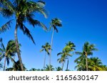 palm trees on blue sky miami... | Shutterstock . vector #1165630147