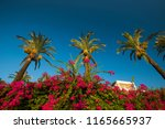 Bougainvillea Flowers And Palms