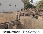buiba mandinka village  the... | Shutterstock . vector #1165694914