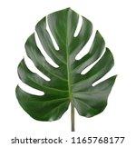 tropical jungle monstera leaves ... | Shutterstock . vector #1165768177