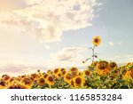 one sunflower rising above the... | Shutterstock . vector #1165853284