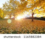 autumn maple trees in park... | Shutterstock . vector #1165882384