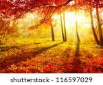 autumn. fall. autumnal park.... | Shutterstock . vector #116597029