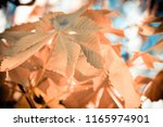 the background of yellow leaves | Shutterstock . vector #1165974901