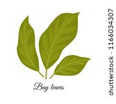 bay leaves  vector illustration ...   Shutterstock .eps vector #1166034307