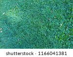 nature green grass background... | Shutterstock . vector #1166041381