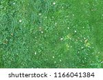 nature green grass background... | Shutterstock . vector #1166041384