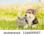 Stock photo pembroke welsh corgi puppy lying with kitten on a summer grass space for text 1166095057
