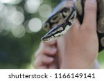 cute small green snake at the... | Shutterstock . vector #1166149141